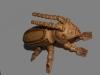 Nº48.El escarabajo de la mujer cabra