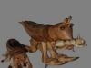 Nº45.La mantis y la hormiga (vista 1)