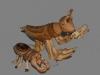Nº45.La mantis y la hormiga (vista 2)