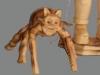 Nº5/2.El cantimpón y la araña